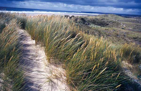 Beaubigny-Hatainville dunes